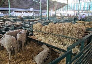 Caja Badajoz Grupo Ibercaja aportar� 27.000 euros para la Feria Ganadera de Zafra
