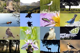 La Diputaci�n de Badajoz edita las principales publicaciones ornitol�gicas del plan ''Guadiana Internacional''
