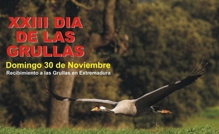 El D�a de las Grullas en Navalvillar de Pela divulgar� la''importancia'' de Extremadura para estas aves