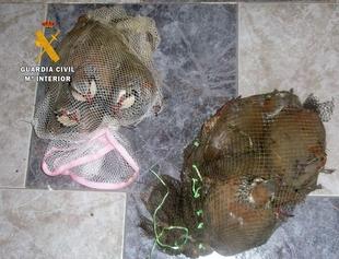 La Guardia Civil sorprende a cuatro furtivos con artes prohibidas para cazar perdices en Malcocinado