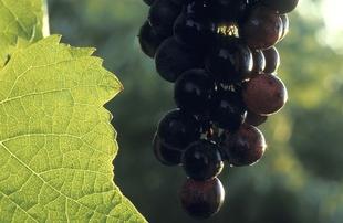 La Estaci�n Enol�gica de Almendralejo emite m�s de mil certificados de exportaci�n de vinos extreme�os en 2014