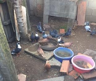 Fepaex y 'Pon un bicho en tu vida' denuncian al alcalde de Villar del Rey por ''no asistir'' a un conjunto de m�s de 60 animales desamparados