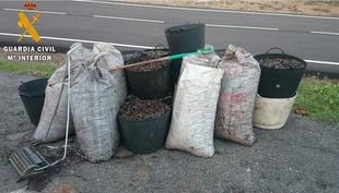 Once detenidos por el robo de 2.000 kilos de aceitunas en cuatro fincas de la provincia de Badajoz