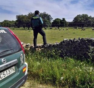 Detenido por estafar a varios ganaderos en Badajoz al venderles ganado que nunca entregaba