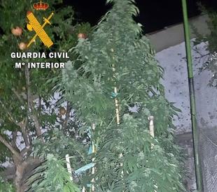 Dos detenidos en Santa Marta de los Barros y Guare�a por cultivo de marihuana