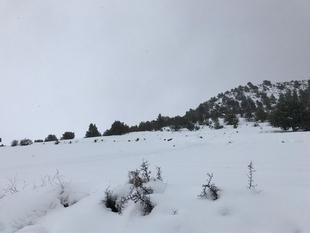 El 112 Extremadura activará este jueves el aviso amarillo por nevada en el norte de la provincia de Cáceres