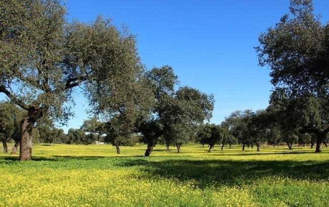 Unas jornadas en Villafranca de los Barros (Badajoz) analizará la situación de la dehesa extremeña