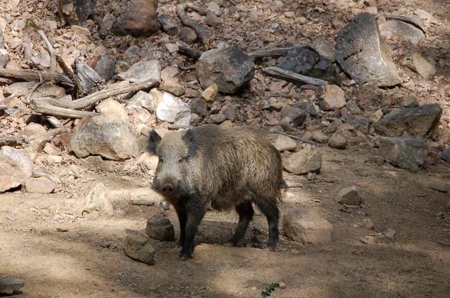 Los amantes de la caza se dan cita este domingo en Ahigal (Cáceres) en el IV Día del Cazador Extremeño