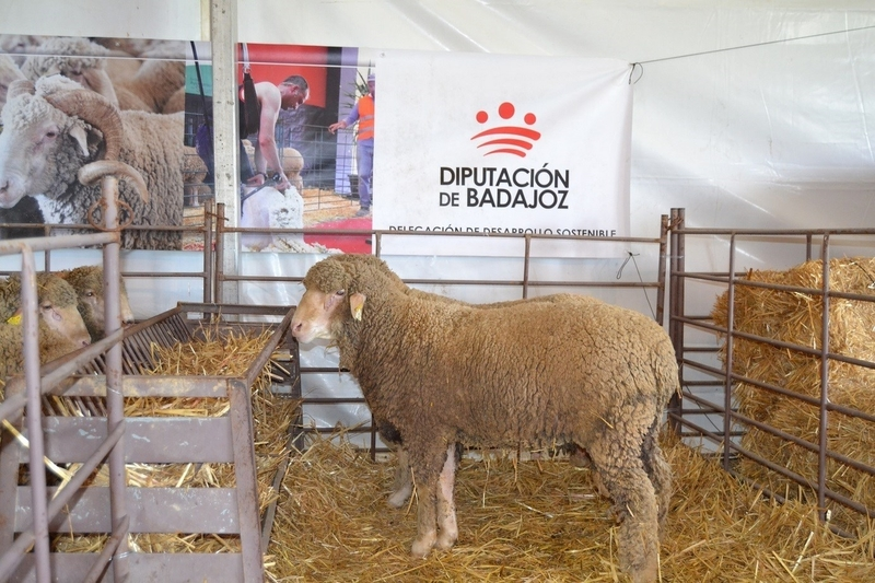 La Feria Ganadera y Agroturística de La Siberia reúne a más de 12.000 visitantes y a unas 300 cabezas de ganado