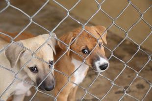 La Diputación de Badajoz activa la página web para la adopción de perros abandonados