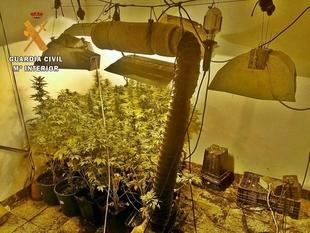 Investigado un vecino de Alburquerque tras ser desmantelados dos puntos de cultivo y venta de marihuana