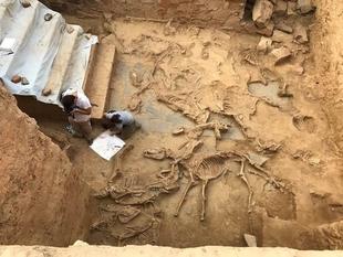 Hallan restos de 19 animales sacrificados y un ajuar para banquetes en el santuario tartésico de Turuñuelo