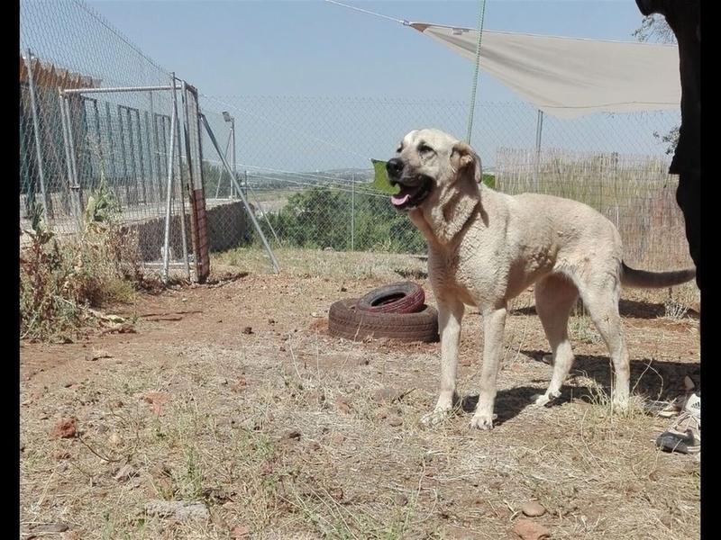 La Diputación facilita más de una veintena de adopciones de perros abandonados en diez días