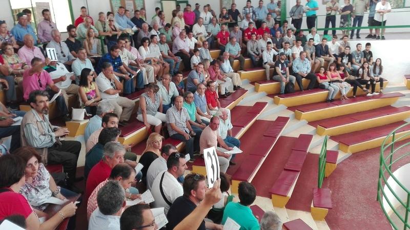 El ganado ovino de la finca La Cocosa de Diputación de Badajoz subastado en Zafra logró un remate final de 7.880 euros