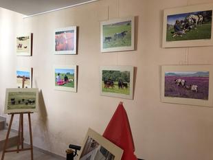 Segura de León acoge la exposición fotográfica Toros y Dehesa de Extremadura