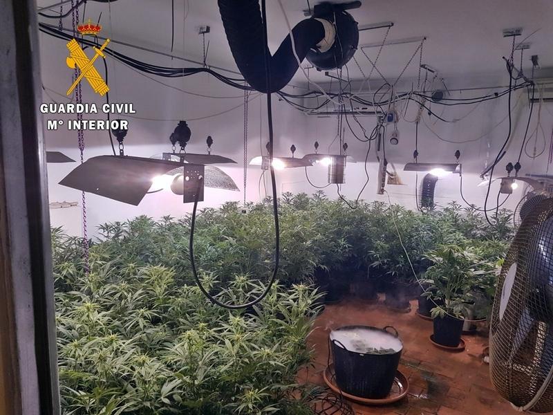 La Guardia Civil interviene 220 plantas de marihuana en una vivienda de Talavera la Real