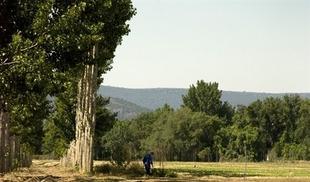 El vivero de la Diputación de Cáceres ofrece a los ayuntamientos más de 40 especies de árboles para decorar sus calles