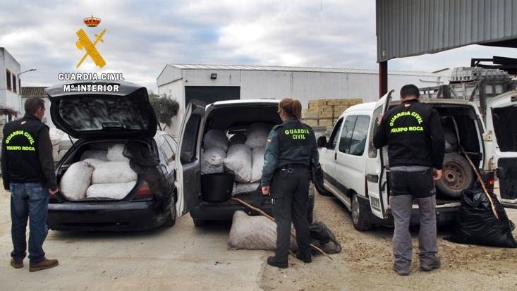 Detenidos seis integrantes de un grupo delictivo dedicado al robo de aceitunas