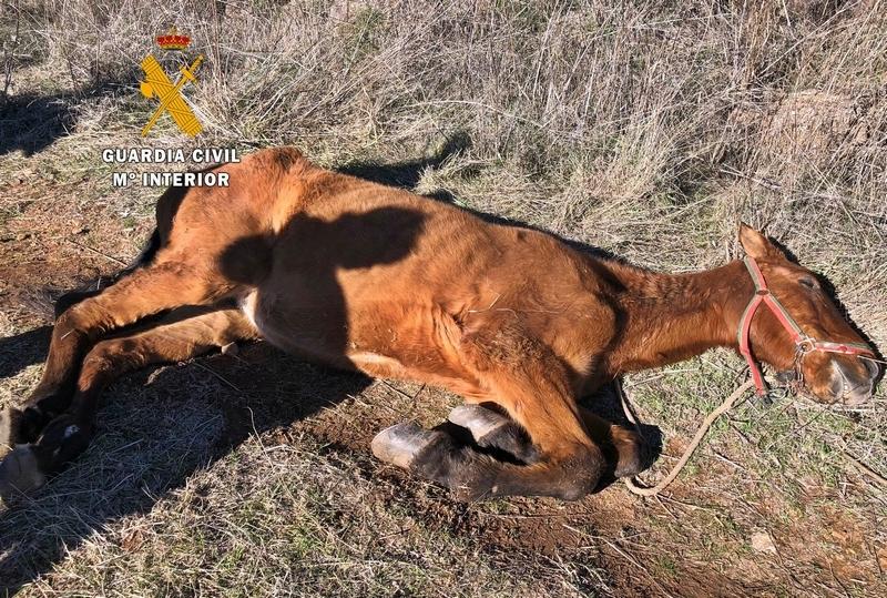 Investigado por maltrato animal el dueño de un caballo que falleció con ''síntomas evidentes de desnutrición''