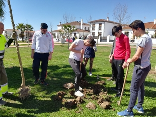 La Diputación planta árboles en Olivenza