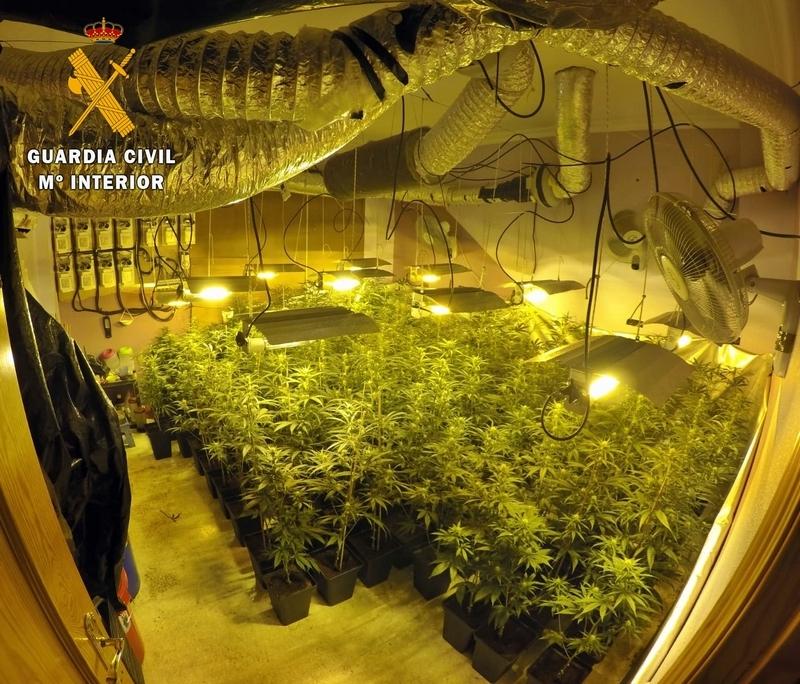 La Guardia Civil interviene 150 plantas de marihuana en un domicilio de Montijo