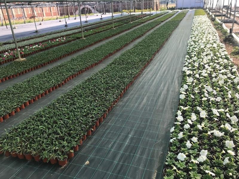 La Diputación de Cáceres entrega 25.000 plantas ornamentales a 109 municipios para embellecer sus calles