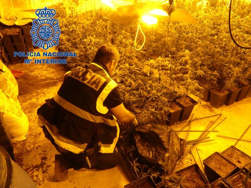 Policía Nacional desarticula un grupo dedicado al cultivo y la venta de marihuana