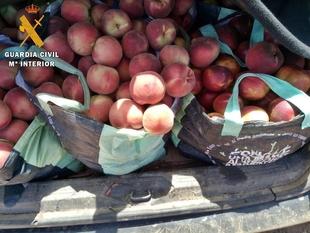 Sorprendidos dos vecinos de Badajoz tras sustraer 300 kilos de fruta en una explotación de Mérida
