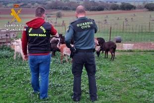 Sorprendidos con el ganado y material que supuestamente sustrajeron de explotaciones cercanas