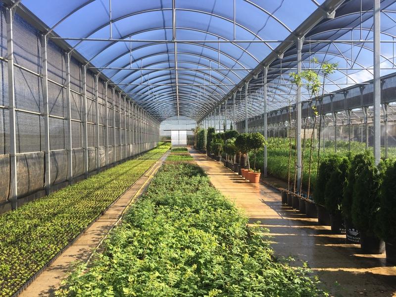 El vivero de la Diputación de Badajoz suministra plantas florales a más de 110 municipios de la provincia