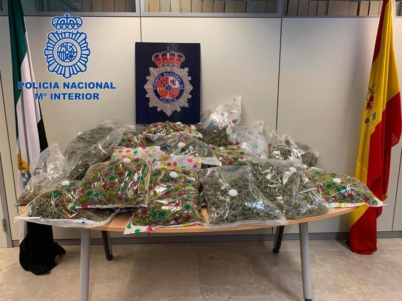 Policía Nacional detiene a dos personas por cultivo de marihuana