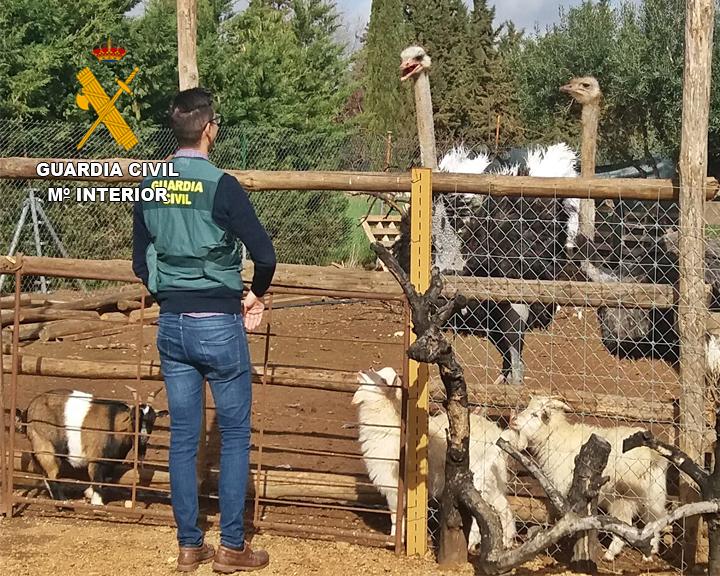 La Guardia Civil desenmascara un zoológico clandestino en Villafranca de los Barros