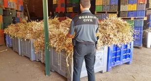 Detenidas tres personas por la sustracción de 7.000 kilos de ajos