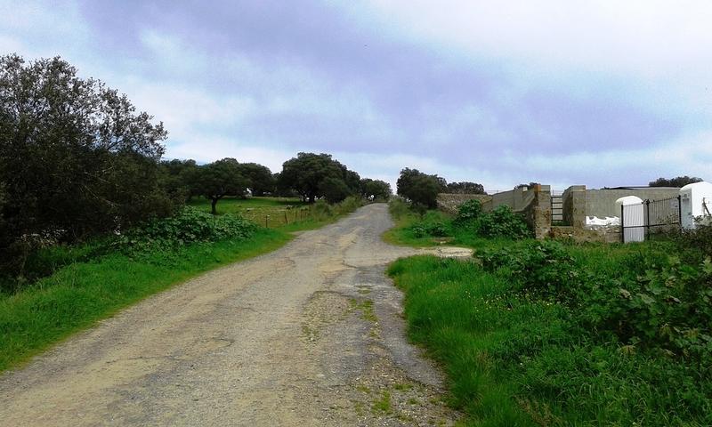 El Ayuntamiento de Jerez pone en marcha un programa municipal para el arreglo de caminos rurales