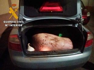 Detenidas cuatro personas por robo de ganado en explotaciones ganaderas de Valencia de las Torres y Villalba de los Barros