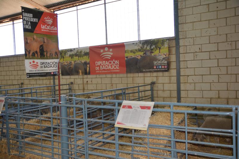 Diputación de Badajoz ha participado con éxito en el 34 Salón Ovino de Castuera