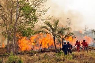 FELCODE destina 24.000 € a combatir los graves incendios que asolan la región de la Chiquitanía, en Bolivia