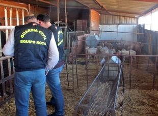 La Guardia Civil desarticula un grupo criminal organizado, dedicado al robo de ganado ovino en explotaciones ganaderas