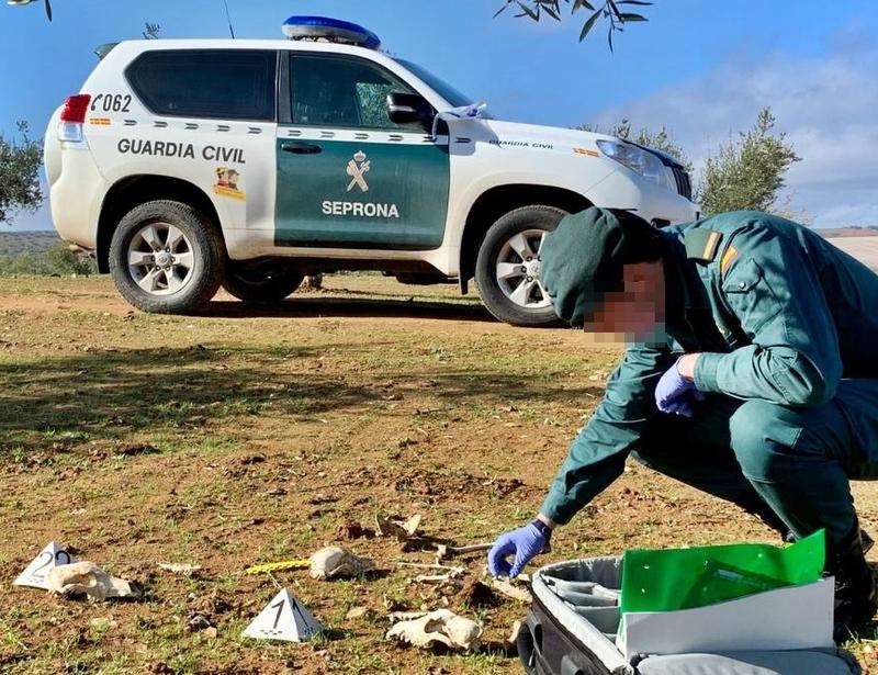 La Guardia Civil investigó a once personas y a un veterinario por delitos de maltrato animal al dar muerte a 46 perros