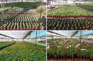 La Diputación de Cáceres abre el plazo para que los ayuntamientos soliciten plantas ornamentales