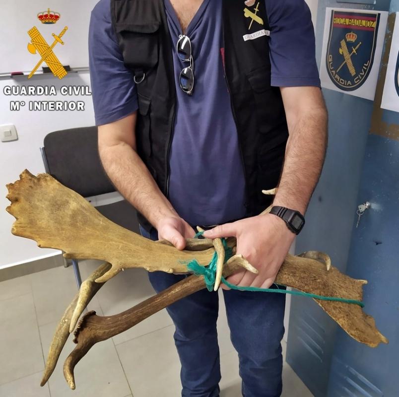 Actuación de la Guardia Civil contra la venta clandestina de trofeos de caza