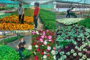 La Diputación ya está entregando las plantas ornamentales de su vivero a los municipios que lo han solicitado