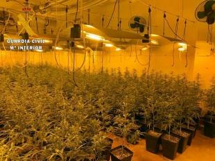 La Guardia Civil detiene a un grupo criminal dedicado al cultivo de marihuana