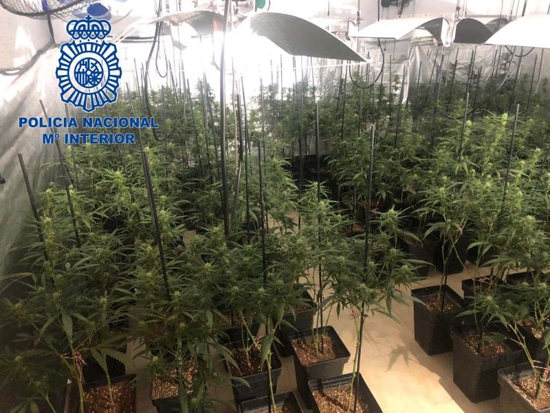 La Policía Nacional desmantela una plantación de marihuana con 356 plantas