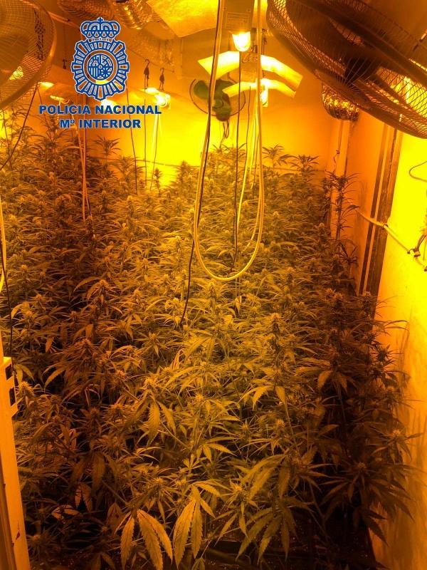 Desmantelada una plantación ''indoor'' de marihuana con 200 plantas