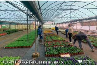 La Diputación comienza el reparto de la nueva Campaña de plantas ornamentales de invierno
