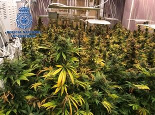 La Policía desmantela en Mérida una plantación ''indoor'' de marihuana con 130 plantas