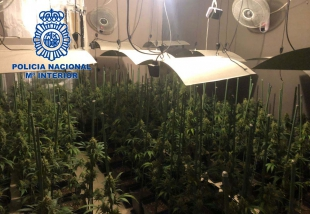 La Policía Nacional detiene al responsable de una plantación ''indoor'' de marihuana
