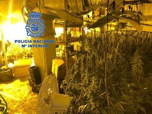 """La Policía Nacional desmantela una plantación de marihuana """"indoor"""""""