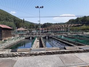 El Centro de Reproducción de Salmónidos de la Junta repuebla de truchas los ríos de las comarcas extremeñas de Jerte, La Vera, Hurdes o los Ibores
